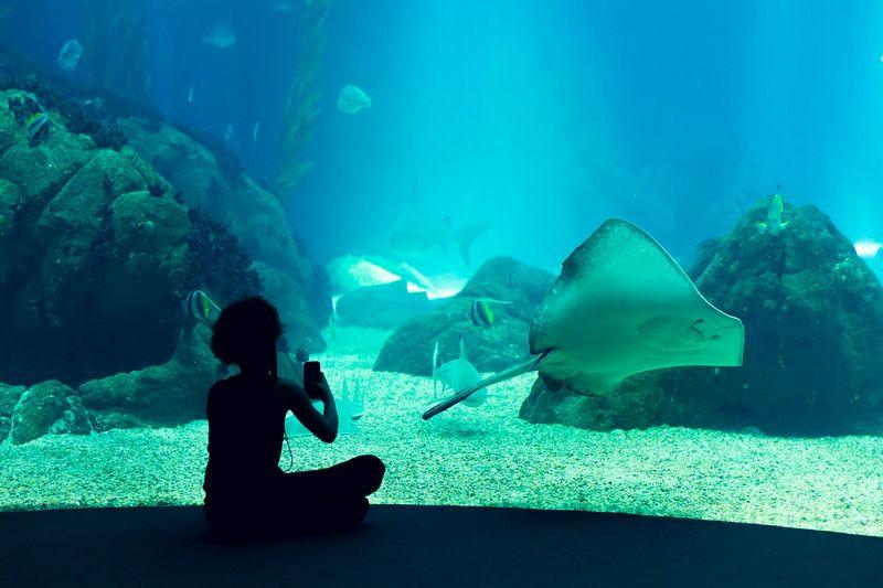 Oceanarium Afrykarium we Wrocławiu - sprawdź ceny i dojazd
