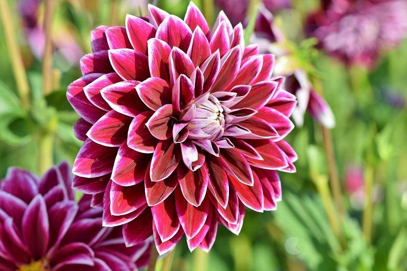 Kwiat w Ogrodzie Botanicznym we Wrocławiu