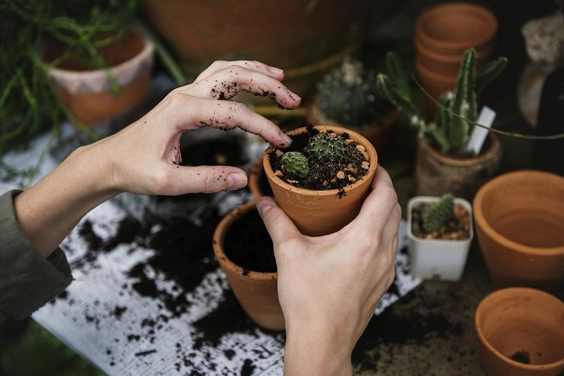 Szkółka Roślin: napełnianie doniczki ziemią