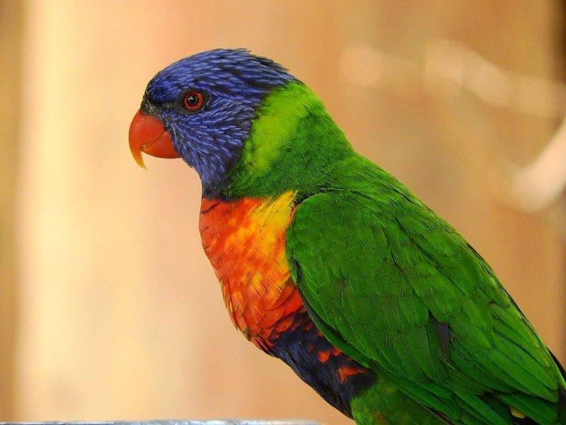 Papuga we wrocławskim zoo