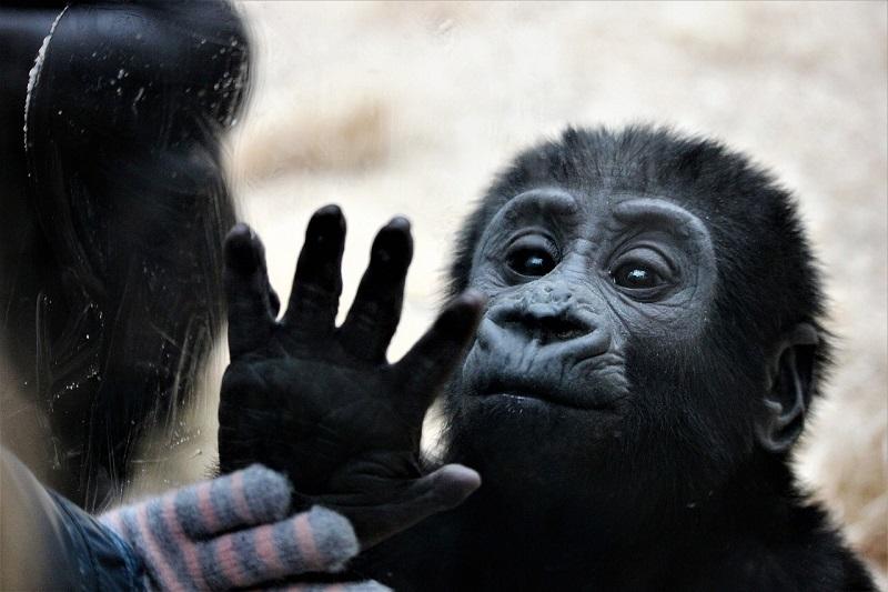 Małpka w Zoo